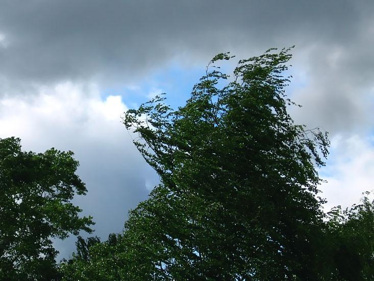 Сегодняшний ожидаемый ветер в Новгородской области входит в критерии неблагоприятных явлений