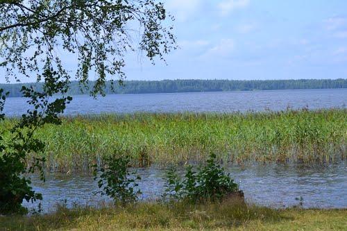 Роспотребнадзор запретил купание на двух озерах в Окуловском районе