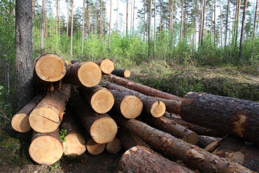 В Демянском районе мастер леса Залесский собирался распорядиться древесиной на свой лад