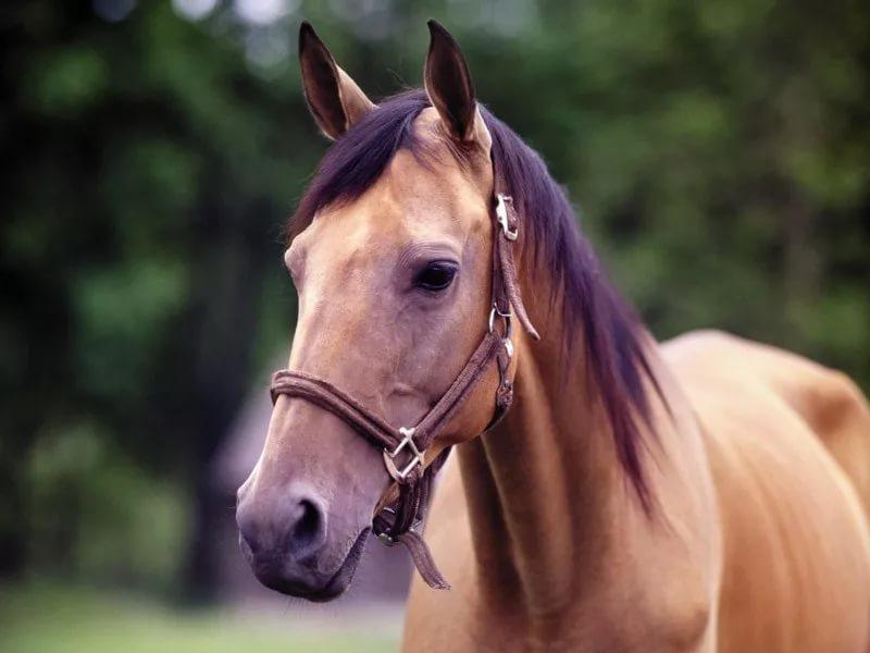 Конь в ярком прикиде, бежавший по Большой Московской, «уже дома»