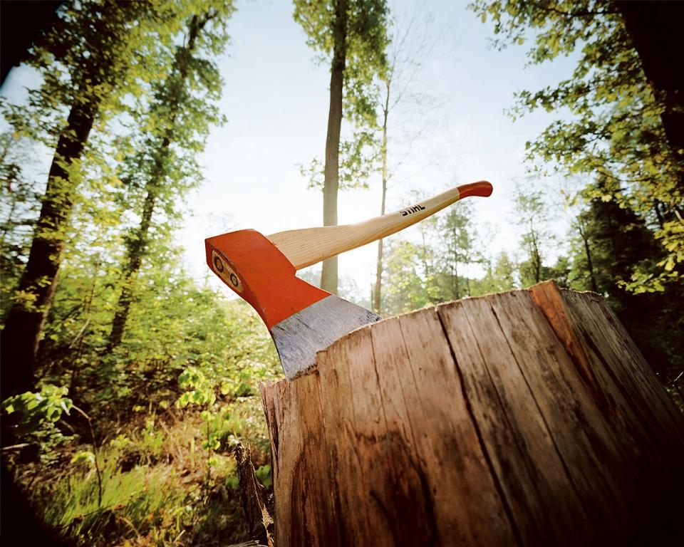 Планы на демянскую древесину закончились для мастера леса Залесского штрафом