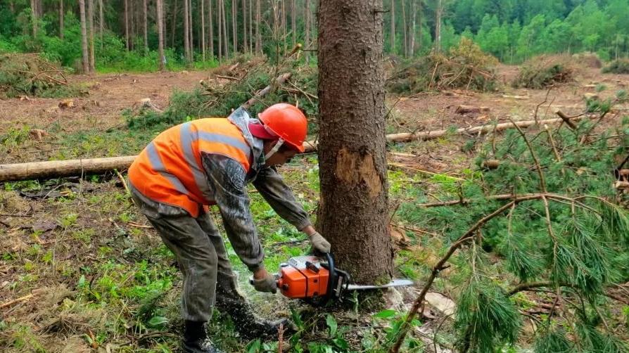 Новгородский предприниматель оштрафован за вырубку леса под строительство трассы М-11