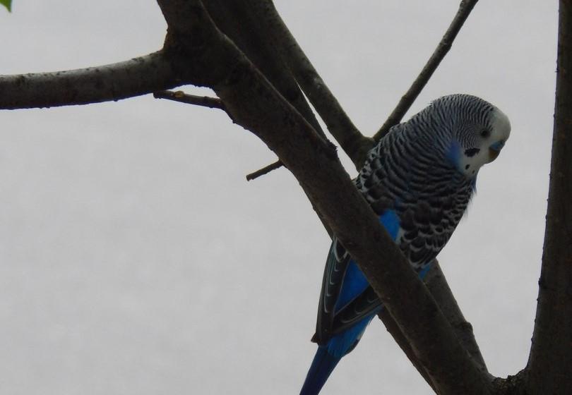 Флора ловит попугая: чей пернатый в кустах сирени на улице Коровникова?