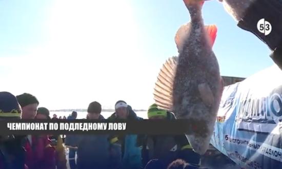 Самый большой улов на «Зимнем хищнике» в Наволоке составил почти полкило