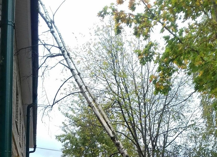 В Новгородской области произошел деревопад. Жители делятся последствиями сильного ветра