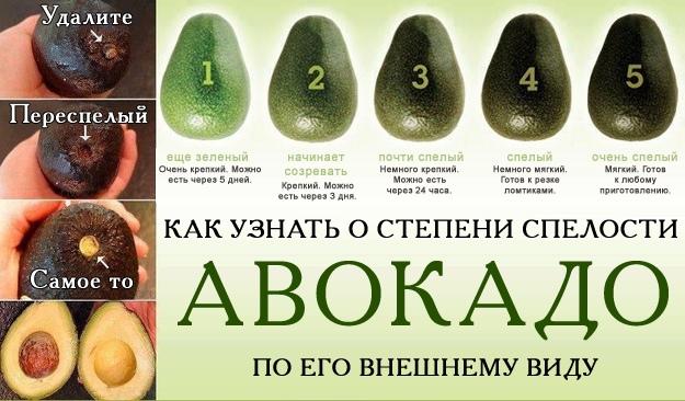 Avokado3