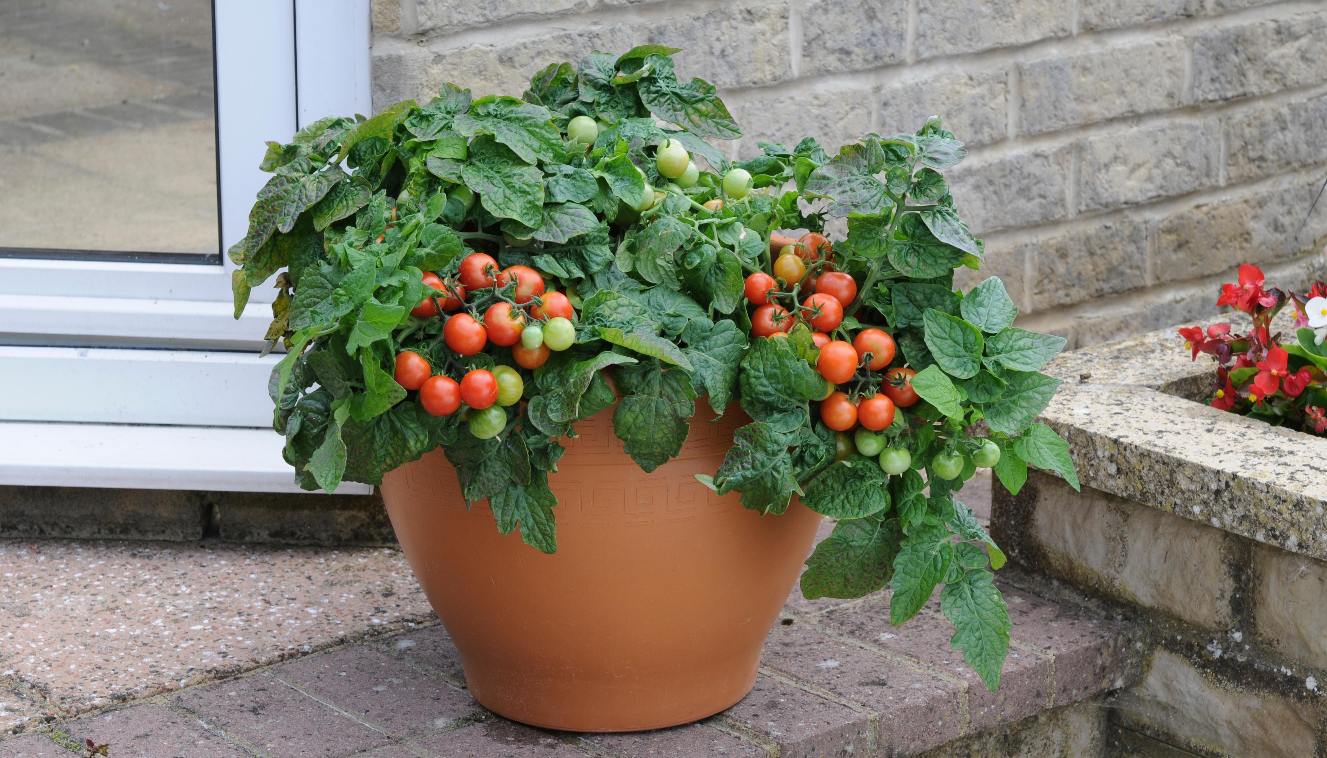 Какие овощи и фрукты можно выращивать на балконе?