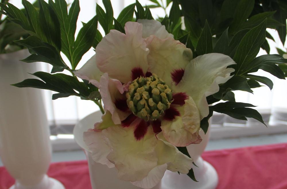 Цветов, купить пионы цветы в великом новгороде