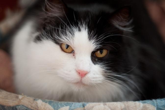 В Окуловке кот сдал неплательщика алиментов приставам