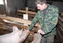 За январь-май производство мяса в Новгородской области выросло на 40%