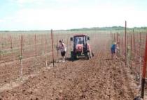 В 2015 году помощь 222 новгородским аграрникам превысит 38 млн рублей