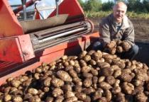 1 ноября в Новгородской области откроется еще один логистический центр для хранения картофеля