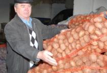 На сельскохозяйственной ярмарке в Великом Новгороде картофель продавали по 10 рублей за кг