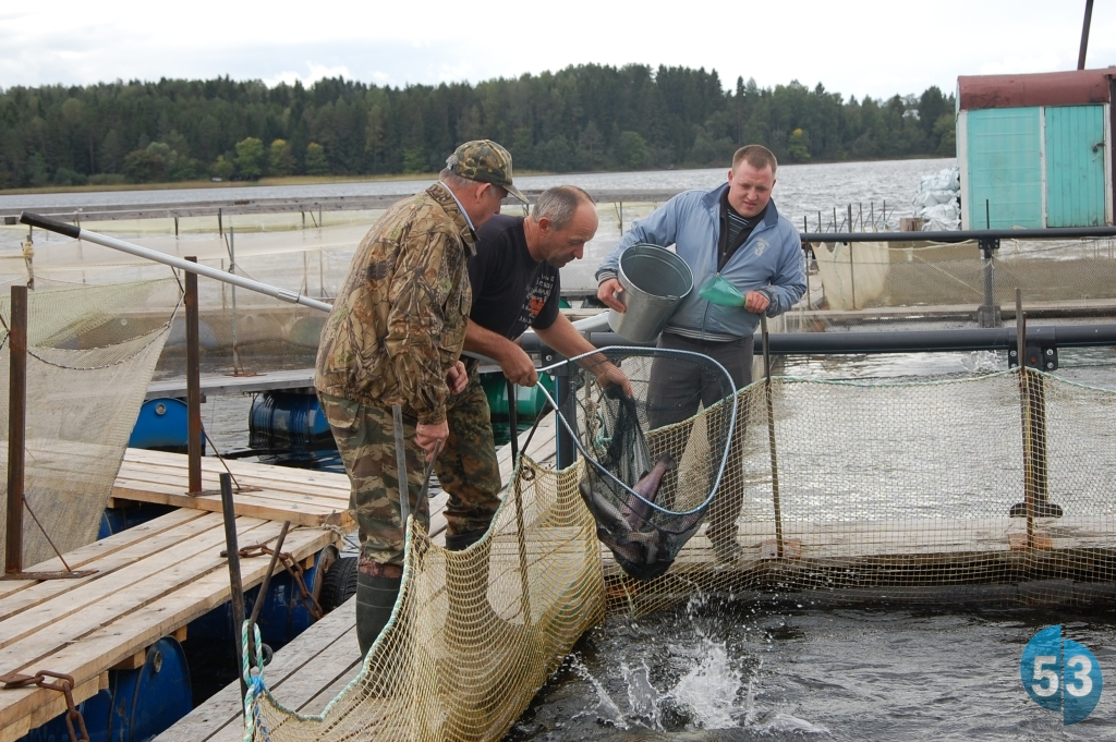 рыбалка в демянском районе