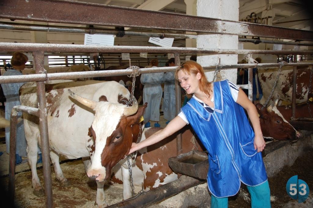В Новгородской области принят закон «О молочном животноводстве»