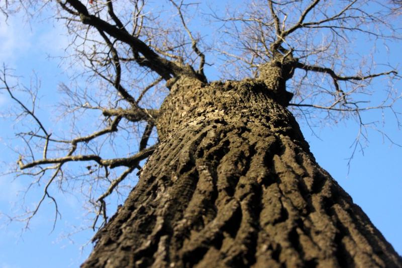 деревья новгородской области фото с названиями постоянно вызывал