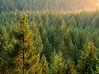Сергей Митин примет участие в заседании Совета по развитию лесного комплекса при Правительстве РФ