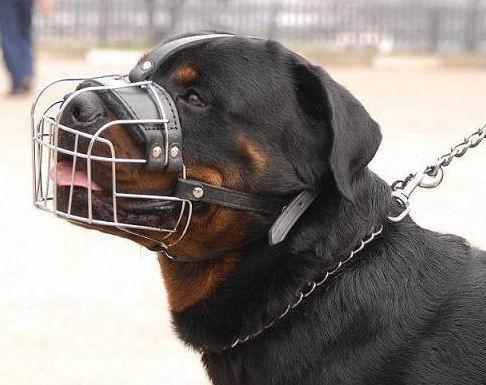 Депутаты Великого Новгорода озадачились проблемой выгула собак и решили заслушать начальника городского УМВД
