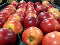 Новгородский Госавтонадзор задержал 19,5 тонн санкционных яблок, которые будут уничтожены