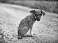 В Демянском районе жители обеспокоены предстоящим отловом собак