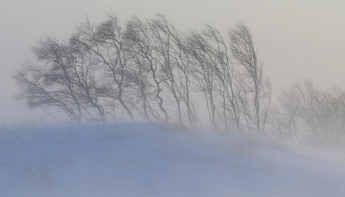 Сколько градусов ниже 0 будет в феврале в Новгородской области?