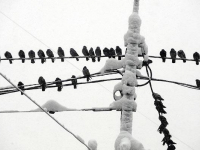 40 населённых пунктов Хвойнинского района остались без света