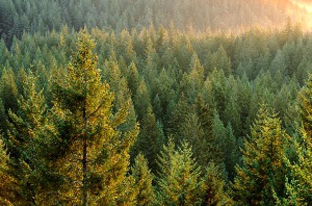 Более 100 гектаров лесных угодий восстановлены в Новгородском районе по судебным решениям
