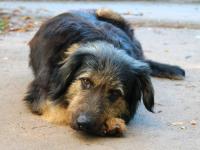 До конца года в Великом Новгороде отловят 217 безнадзорных животных