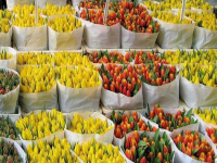 С 6 по 8 марта в Великом Новгороде будут работать 22 цветочные ярмарки