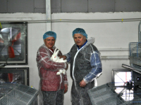 В Боровичском районе в 2017 году заработают три кроликофермы