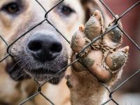 На отлов бездомных животных в Парфинском районе будет потрачено 142 тысячи рублей