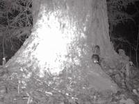 Новгородская белка-летяга успешно пережила зиму