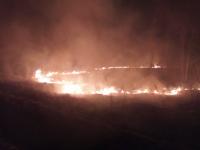 Видео: в Батецком районе пал травы угрожал превратиться в лесной пожар