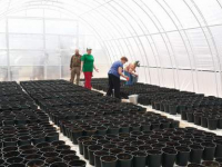 В Новгородской области приступили к высадке безвирусного картофеля