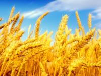 Андрей Никитин: «У нас в области сельское хозяйство развито, мягко скажем, не сильно хорошо».