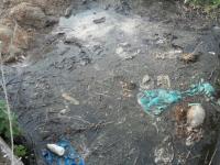 Фотофакт: мёртвые свиньи не утилизируются в Волховце