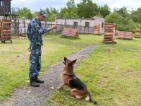 Лучших служебных собак в системе исполнения наказаний воспитывают в Парфине