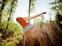 В Новгородской области незаконная вырубка леса нанесла ущерб в 21 млн рублей