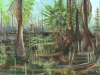В Новгородской области палеонтологическому музею подарили корень плауна возрастом в 300 млн лет
