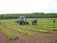 В Новгородской области посажено 3500 гектаров новых лесов