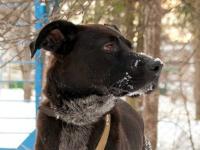 «Верный друг»: Мухтар. Пёс, пострадавший за преданность