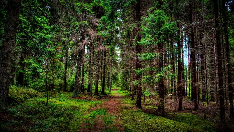 В соседних районах Новгородской области две старушки-ровесницы пропали в лесу