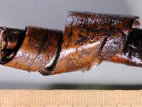 Археологи пока не готовы прокомментировать содержание берестяной грамоты №47