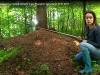 Корреспондент Первого канала измерила валдайский муравейник с помощью селфи-палки