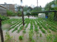 МЧС предупреждает о возможном затоплении районов на востоке Новгородской области