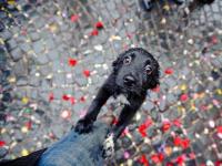 Новгородец оставил восемь голодных щенков на попечение чиновников