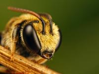 Новгородский пасечник лечит людей взмахами пчелиных крыльев