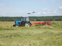 В Новгородской области из-за дождей заготовлена лишь треть кормов от плана