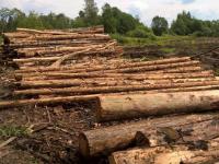 В Окуловском районе лесозаготовитель складирует бревна прямо на территории усадьбы, где родился Миклухо-Маклай