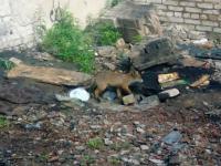Зоолог Андрей Коткин о лисятах в Григорове: «Не надо к ним лезть»